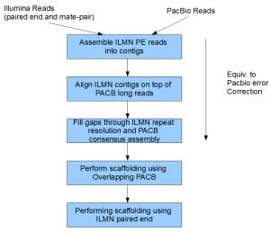 hybrid-genome-assembly